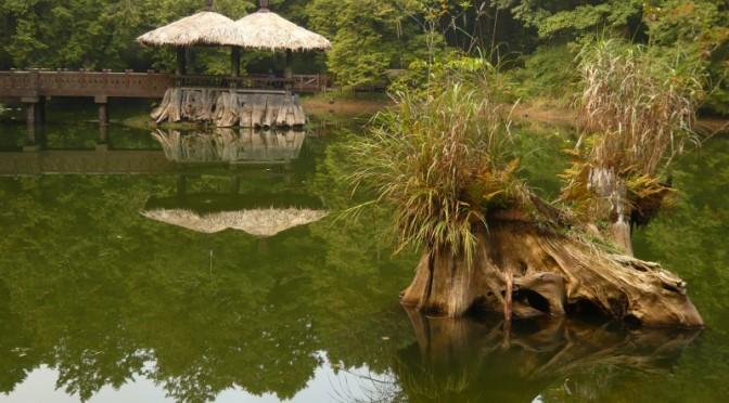 Přírodní park Alishan, Taiwan