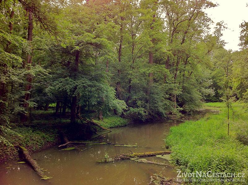 Pohansko - pohled do lužního lesa
