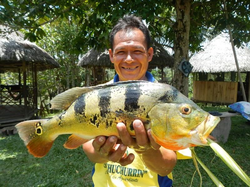 Chytání ryb v Amazonii, Peru