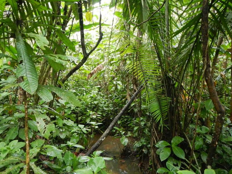 Džungle v Amazonii, Peru