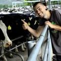 Dojení krav, Nový Zéland