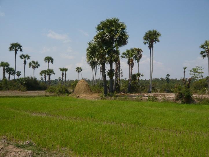 Krajina v okolí Angkoru