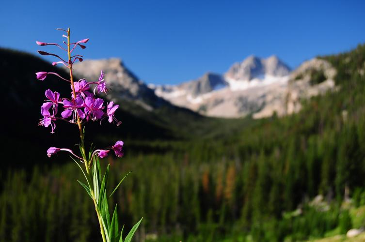 Květina v horách.