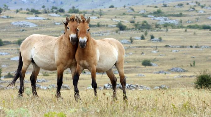 Mongolsko – Čingischánova země