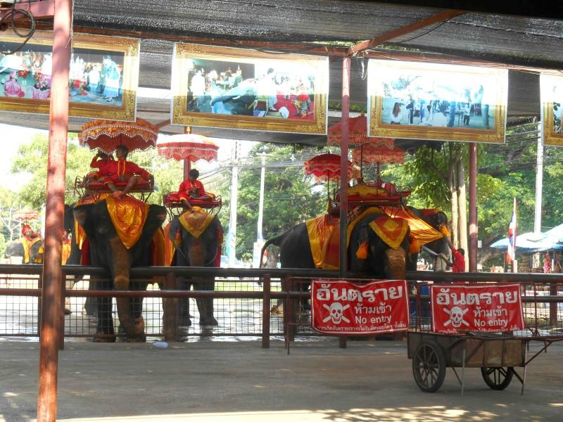 Sloní taxi
