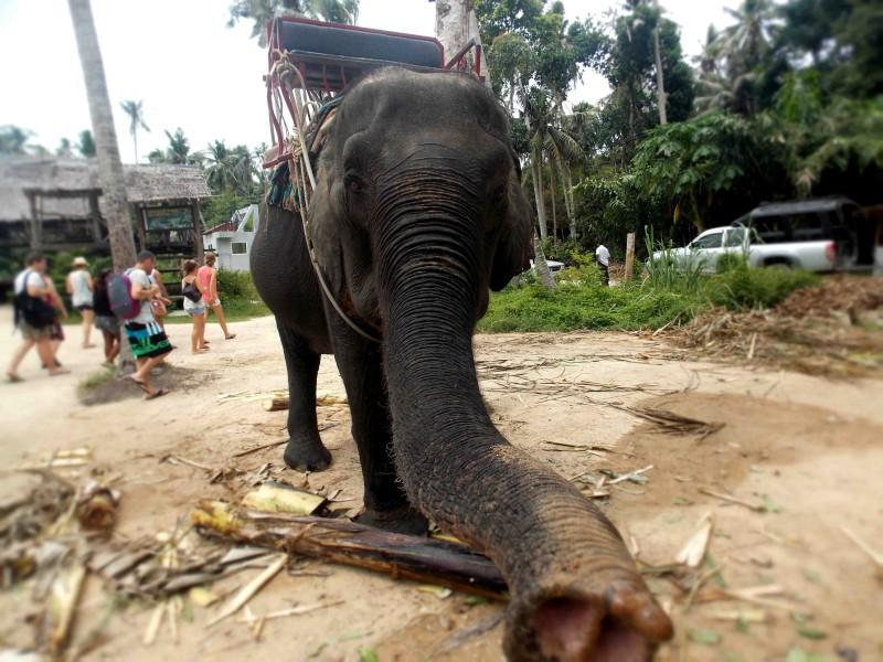 Slon zkoumá objektiv