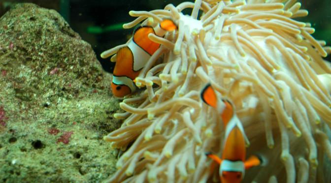 Podmořský svět Kelly Tarlton's SEA LIFE Aquarium, Auckland, Nový Zéland