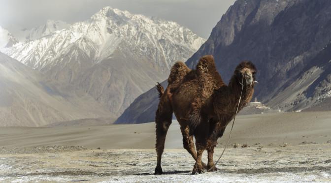 Ladak, Indie