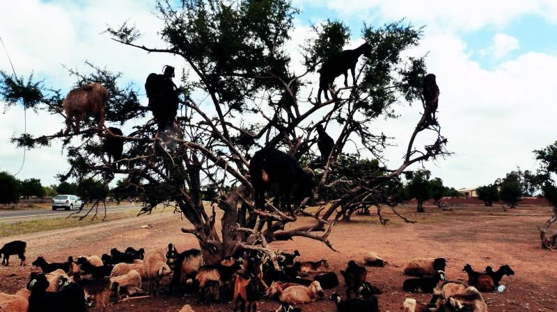 Kozy na stromě.