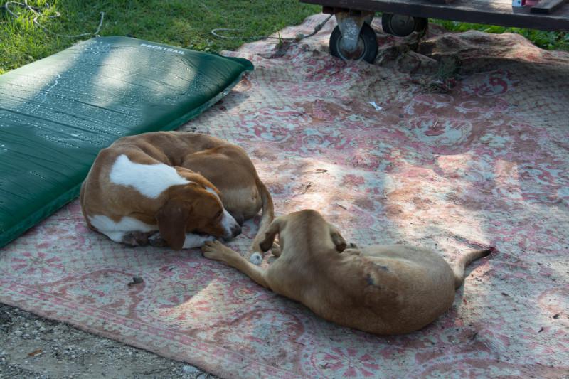 Naše klidné spaní nám hlídali naši věrní společníci, takže jsme si mohli v pohodičce schrupnout i když jsme měli venku nějaké věci - hlídači byli v pohotovosti celou noc... :-)