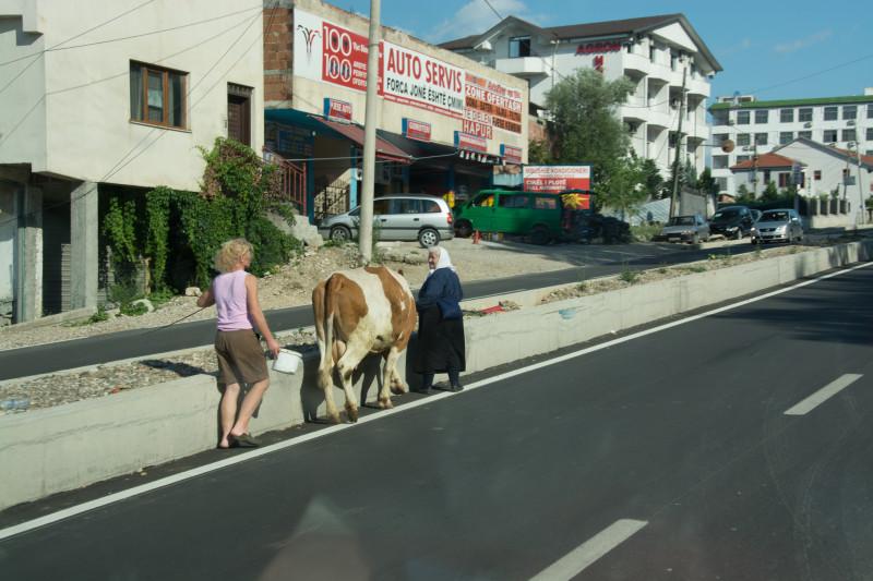 Potkali jsme na dálni i paňmámu s kravkou...