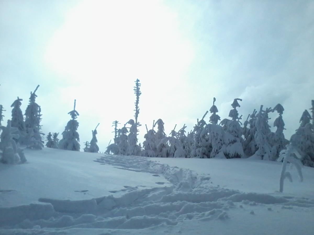 Zima, les