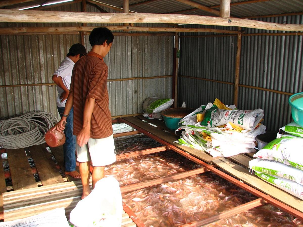 Chov ryb na Mekongu
