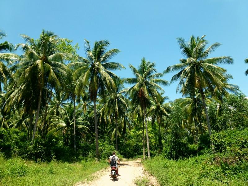 Palmy a skútr. Ko Jum, Thajsko.