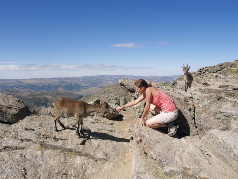 Sierra de Gredos hosrké kozy