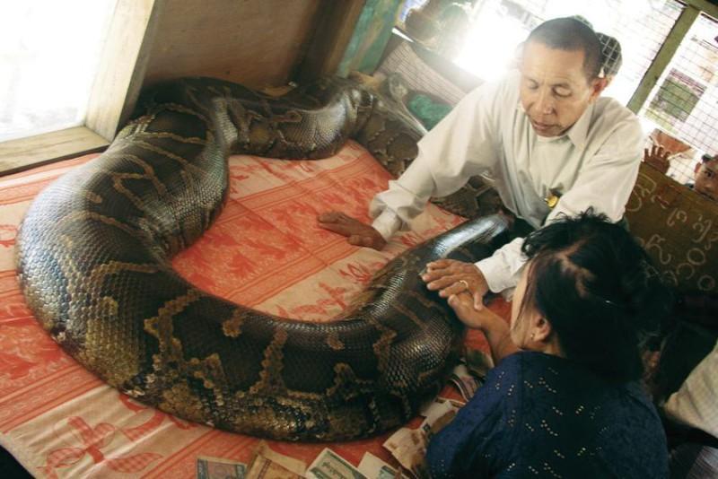 Tohoto hada Honza Homola na talíři neměl.