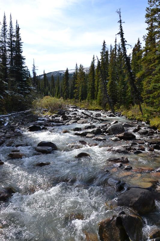 Krásná řeka v národním parku Jasper.