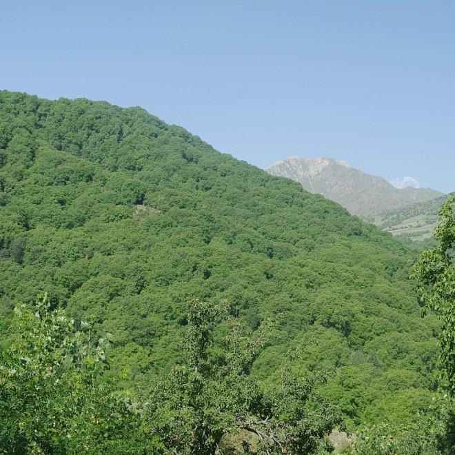 lesy ořešáku královského u obce Arslanbob, Kyrgyzstán