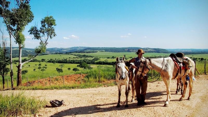 Cesta, koně, příroda