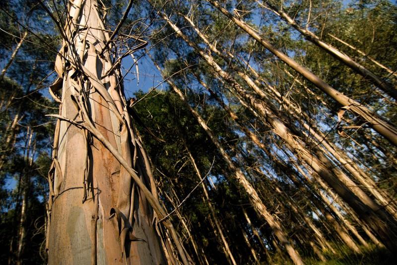 Kantabrijský blahovičníkový les