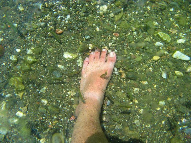 Ohridské rybky okusující kůži na nohou.