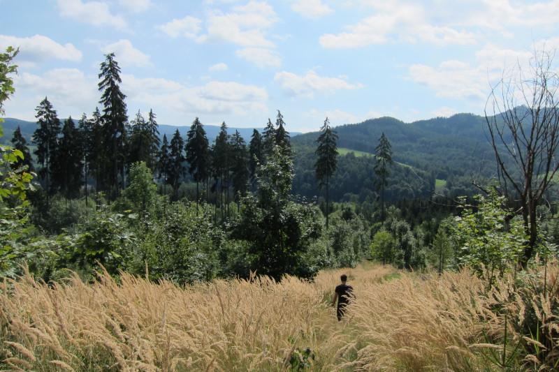 Mírně zarostlá pěšina na trase Velké Losiny - Šumperk