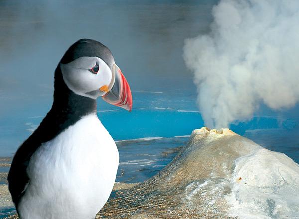 Papuchalk (anglicky puffin) je jedním z živých symbolů Islandu. Tito mořští ptáci vypadají jako kříženci papouška a tučňáka a se svým věčně smutným pohledem jsou roztomilými miláčky Islanďanů i návštěvníků.