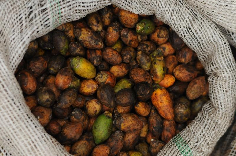 Velkoprodejna ořechů pro stánkové maloprodejce