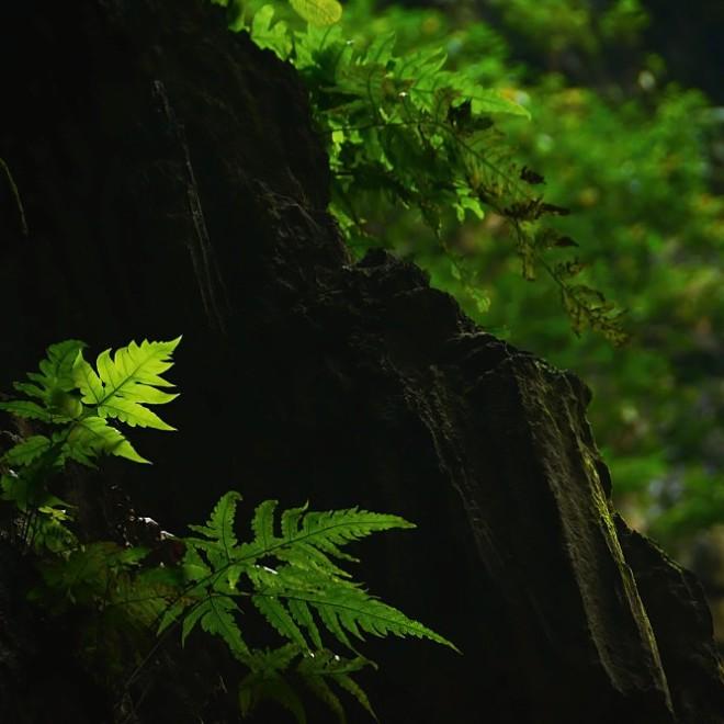 Batu Caves - kapradinám stačí i omezené množství světla