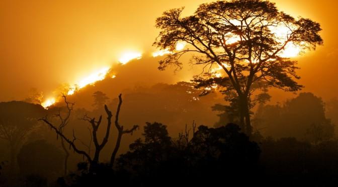 Kedjom-Keku: Jak zbohatnout v Africe