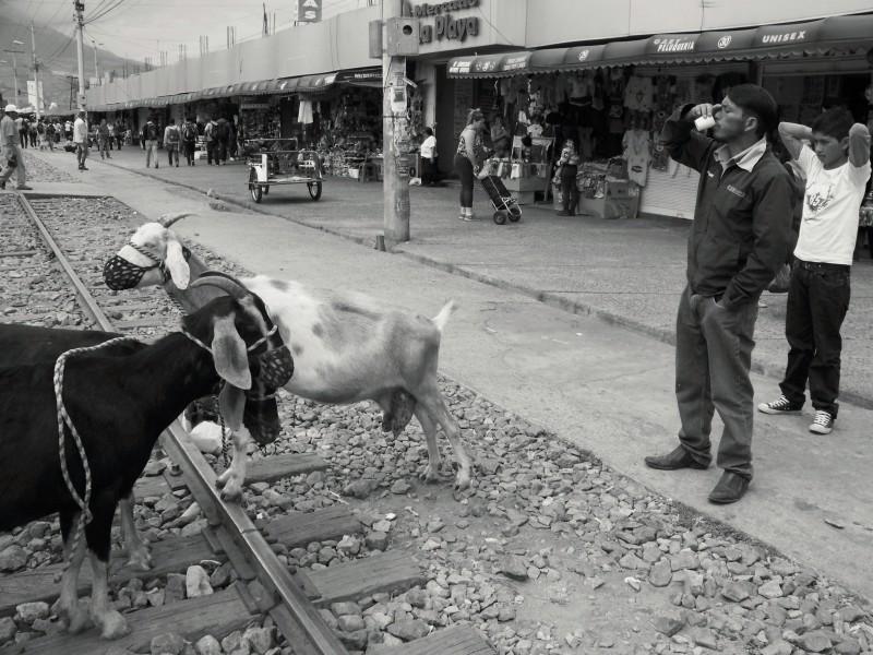 Spokojený zákazník pije čerstvě nadojené mléko. Ibarra, Ekvádor.