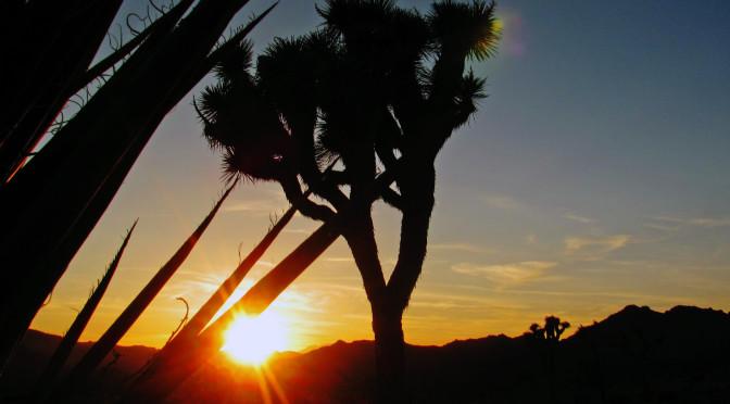 Národní park Joshua Tree – země Jozuova stromu