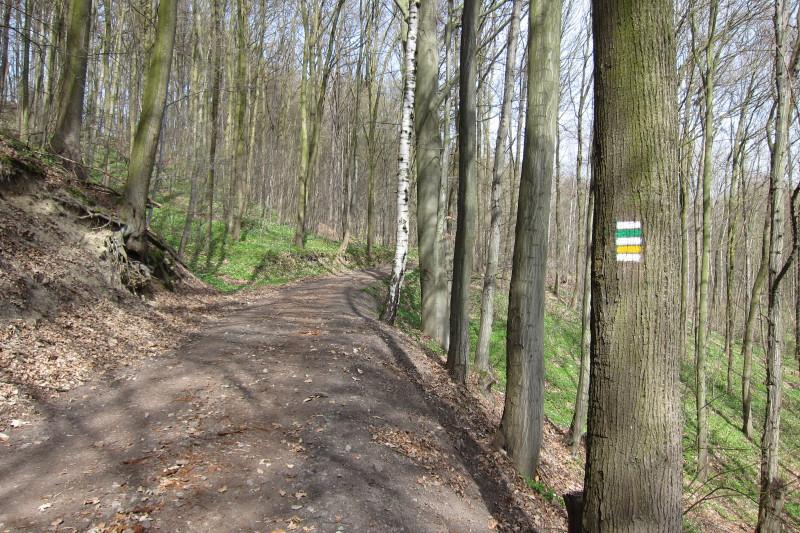 V lesích u Bludova