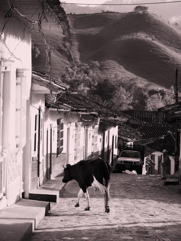 03-01-V-zajeti-magickeho-realismu.Nejkrasnejsi- kolumbijska-vesnice-Concepcion-krava-vchazi-do-domu