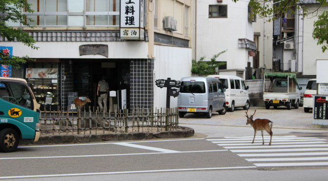 Kouřící sopka na obzoru, divoké laně a jeleni uprostřed města. I takové je Japonsko.