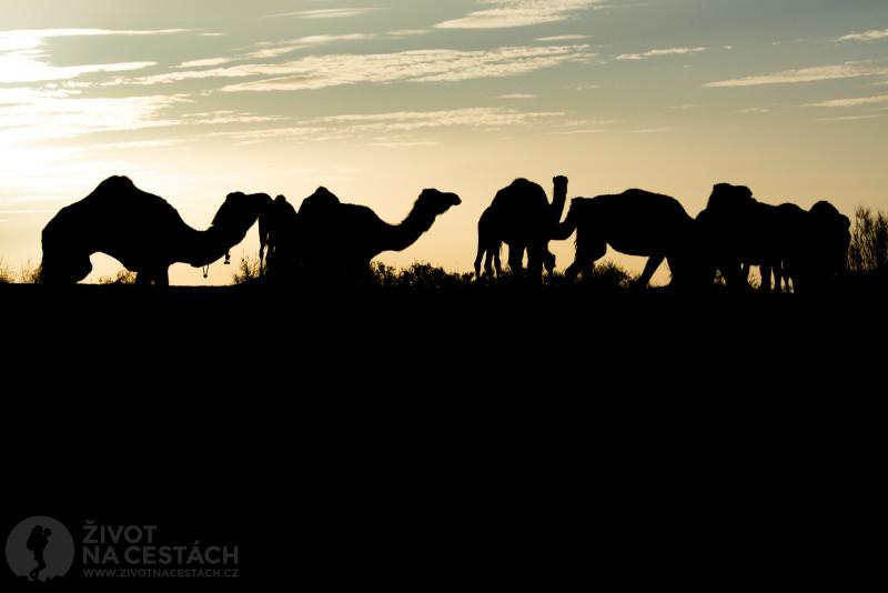 Fotoreport z cesty napříč Tuniskem – Cestou jsme v poušti potkali karavanu velbloudů.