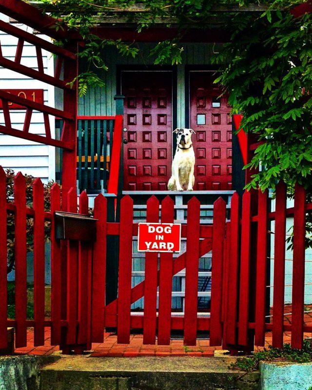 Kdybyste si náhodou nevšimli psa na dvoře, tak je tady naštěstí ještě cedulka, která vás na to náležitě upozorní! Vancouver, Kanada