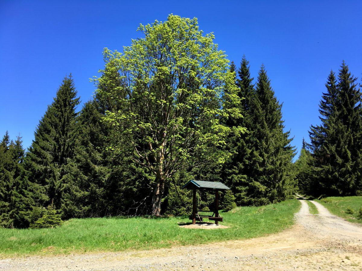 Volská louka - cca 6 km od Branné