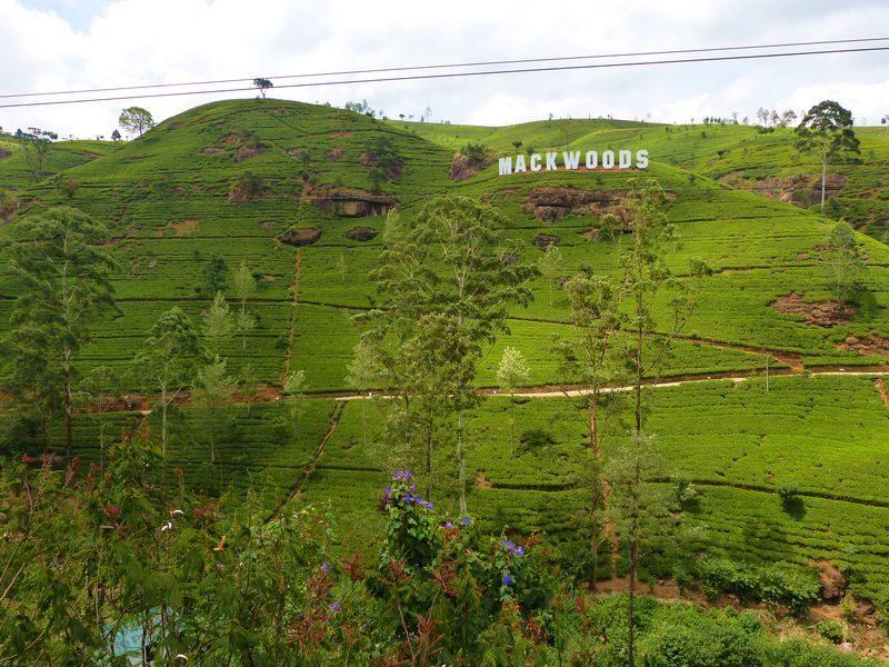 Srí Lanka, země čaje: nejlepší čajové plantáže Cejlonu?