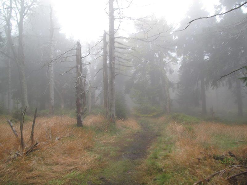 Letní výlety po Krkonoších: Rýchory (Dvorský les)