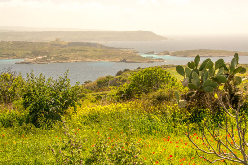 Léto už je tady! Už máte plán? Co takhle jazykový pobyt na Maltě? Pohled na Maltu z ostrova Gozo.