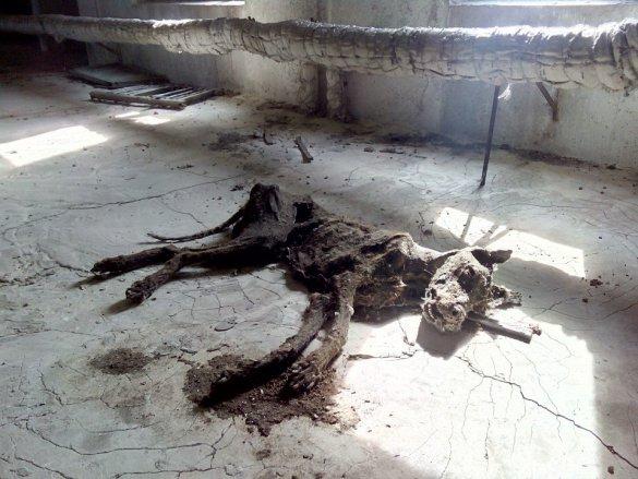 mumie pod střechou..