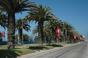 Palmová alej na cestě na pláž, La Serena, Chile