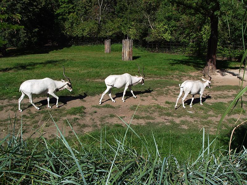 Zoologická zahrada hlavního města Prahy