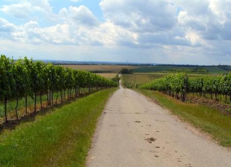 Příjezd k rozhledně mezi vinicemi