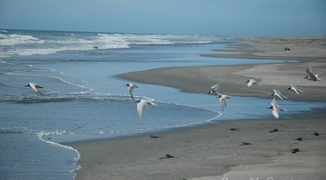 Písečná kosa Farewell Spit, Golden Bay, Jižní ostrov, Nový Zéland