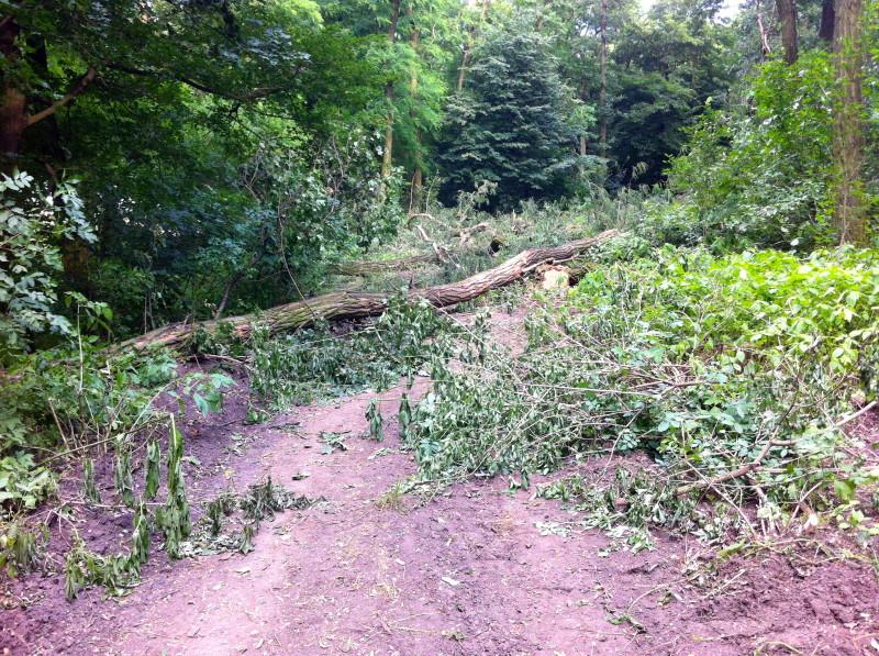 Pořezané stromy přes jednu z nejfrekventovanějších cyklotras v okolí