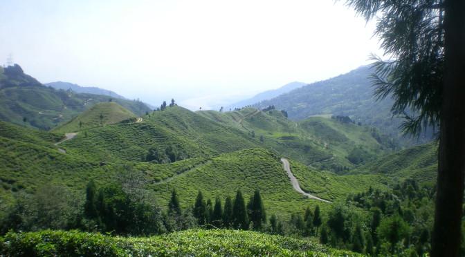 Darjeeling – šálek lahodného čaje s výhledem na Kanchenjungu