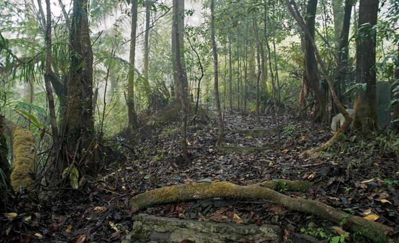 deštný prales, ostrov Flores