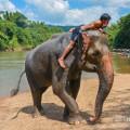 Wangpo Elephant Camp - sloní farma nedaleko Kanchanaburi, Thajsko